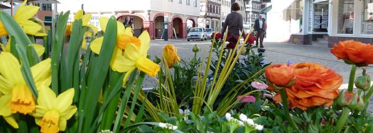 Die Marktstraße blüht auf