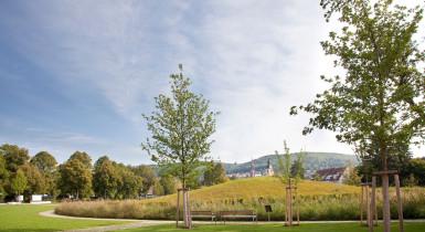 Krautbühl, eine schöne Wiese und Weg und hinten ein Feld, auf der Wiese sind links und rechts jeweils ein Baum und hinten blauer Himmel, bisschen bewölkt, im Hintergrund links sind Bäume