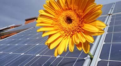Blume und Photovoltaikanlage auf einem Hausdach