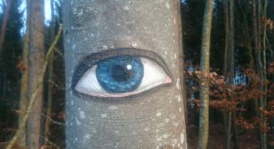 """Baumstamm mit Auge - Tour """"Unser täglich Wald gib uns heute"""""""