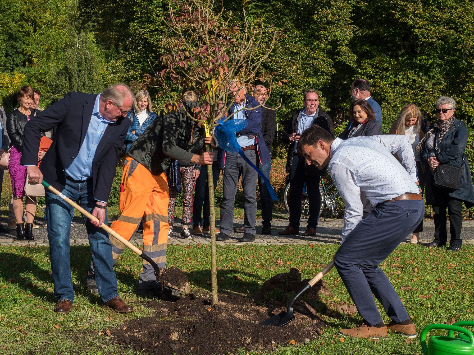 Bild der Bürgermeister beim Baumpflanzen