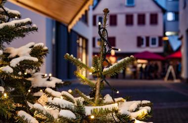 Beleuchteter und verschneite Spitzen eines Tannenbaums im Freien