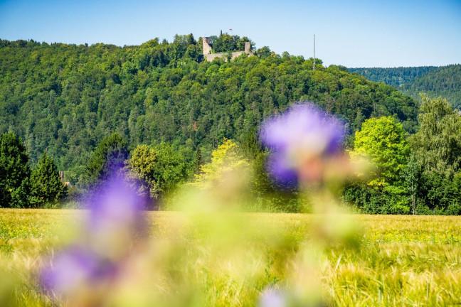 Aussicht auf die Burgruine Hohennagold